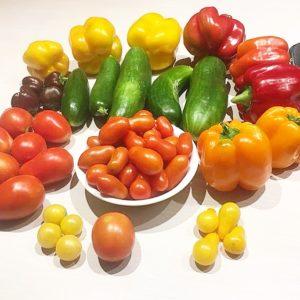 vegetable garden haul